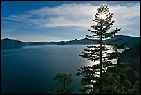 Lake and sun shining through pine tree, afternoon. Crater Lake National Park ( color)