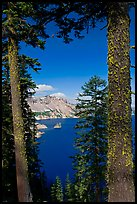 Lake seen between pine trees. Crater Lake National Park ( color)