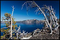 Lake and Mount Scott framed by Whitebark pines on top of Wizard Island cinder cone. Crater Lake National Park ( color)