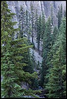 Hemlock in Munson Creek canyon. Crater Lake National Park ( color)