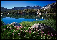Wildflowers and Woods Lake, morning. Kings Canyon  National Park ( color)