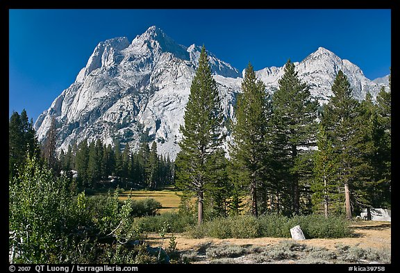Langille Peak and pine trees, Big Pete Meadow, Le Conte Canyon. Kings Canyon National Park, California, USA.