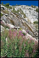 Fireweed and waterfall. Kings Canyon National Park, California, USA. (color)