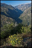 Flowers and Middle Forks of the Kings River. Kings Canyon National Park ( color)