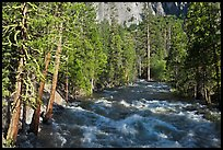 Roaring River in the spring. Kings Canyon National Park, California, USA.