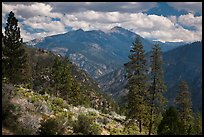 Peaks and trees from Cedar Grove rim. Kings Canyon National Park ( color)