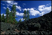 Pines on Fantastic lava beds. Lassen Volcanic National Park, California, USA. (color)