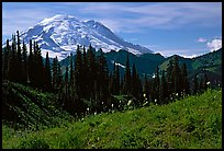 Mt Rainier from Tipsoo Lake area, afternoon. Mount Rainier National Park ( color)