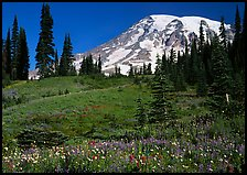 Meadow, wildflowers, trees, and Mt Rainier, Paradise. Mount Rainier National Park, Washington, USA. (color)