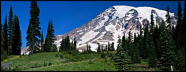 Meaadows and Mount Rainier. Mount Rainier National Park (Panoramic color)