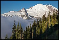 Forest, Mt Rainier and fog, early morning. Mount Rainier National Park ( color)