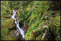 Multi-tiered Deer Creek Falls dropping in forest. Mount Rainier National Park ( color)