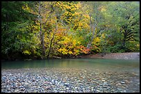 Pebbles, Ohanapecosh River, and autumn foliage. Mount Rainier National Park ( color)