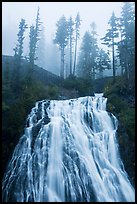 Narada Falls and trees in fog. Mount Rainier National Park ( color)