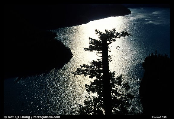 Backlit Tree and Diablo lake, North Cascades National Park Service Complex. Washington, USA.
