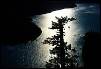 Backlit Tree and Diablo lake, North Cascades National Park Service Complex.  ( color)