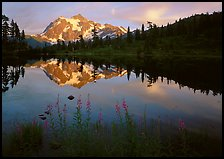 Fireweed, Mount Shuksan reflected in Picture lake, sunset. Washington, USA.