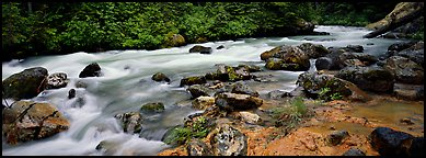 Stream in forest with colored mud. North Cascades National Park (Panoramic color)