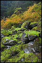 Rocks with green moss, autumn foliage, North Cascades National Park. Washington, USA. (color)