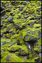 Boulders covered with green moss, North Cascades National Park. Washington, USA. (color)