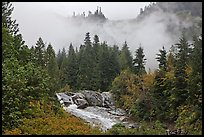 Stream, trees, and fog, North Cascades National Park.  ( color)