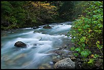 North Fork of the Cascade River in autumn, North Cascades National Park. Washington, USA. (color)