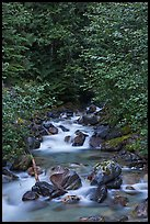 Creek cascading over boulders, Mount Baker Snoqualmie National Forest. Washington ( color)