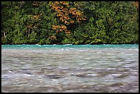 Skagit River during the fall salmon run, North Cascades National Park Service Complex.  ( color)