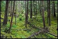 Rainforest with moss-covered floor and fallen trees, North Cascades National Park Service Complex. Washington, USA. (color)