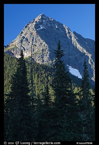 Greybeard Peak rising above forest, North Cascades National Park.  (color)