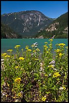 Summer wildflowers and Diablo Lake,  North Cascades National Park Service Complex.  ( color)