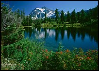 Mt Shuksan reflected in Picture Lake, mid-day. North Cascades National Park, Washington, USA.