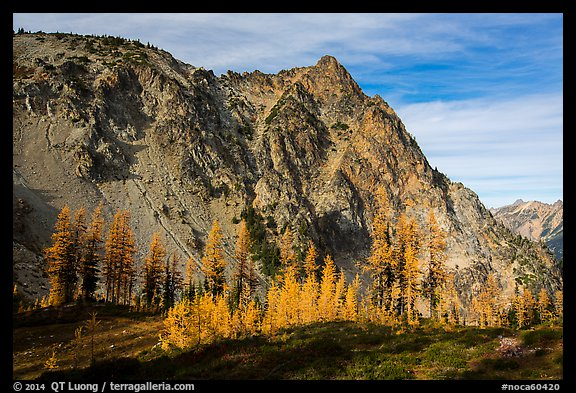 Alpine larch in autumn and rocky peak above Easy Pass, North Cascades National Park.  (color)