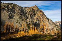 Alpine larch in autumn and rocky peak above Easy Pass, North Cascades National Park. Washington, USA.