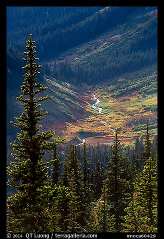 Fisher Creek in autumn, North Cascades National Park.  (color)