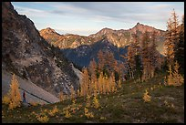 Alpine larch and mountains at sunset, Easy Pass, North Cascades National Park.  ( color)