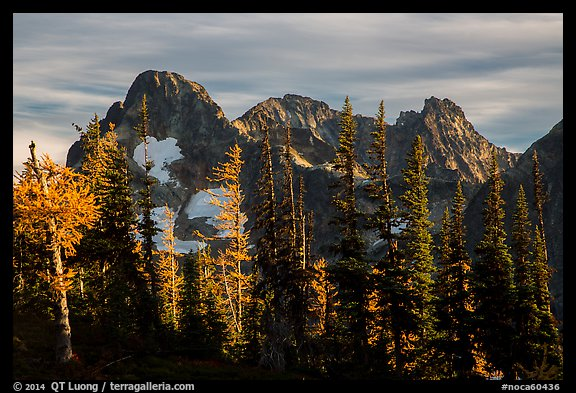 Fisher Peak trees at sunset, North Cascades National Park.  (color)