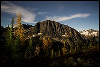 Larches and Mount Logan from Easy Pass at night, North Cascades National Park. Washington, USA.