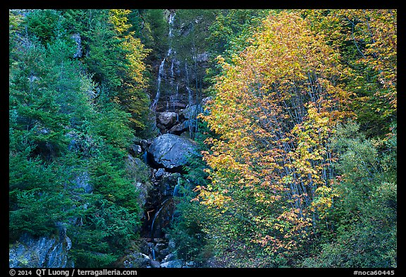 Waterfall in gully bordered by trees in fall foliage, North Cascades National Park Service Complex.  (color)