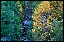 Waterfall in gully bordered by trees in fall foliage, North Cascades National Park Service Complex. Washington, USA.