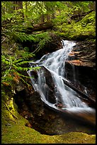 Creek cascading in forest, North Cascades National Park Service Complex. Washington, USA.