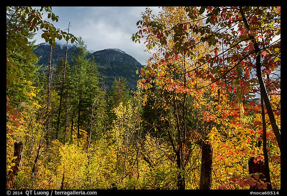 Autumn foliage and McGregor Mountain, North Cascades National Park. Washington, USA.