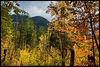 Autumn foliage and McGregor Mountain, North Cascades National Park.  ( color)
