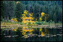 Autumn foliage reflected in Coon Lake, North Cascades National Park Service Complex.  ( color)