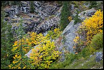 Trees and cliffs in autumn, North Cascades National Park Service Complex.  ( color)