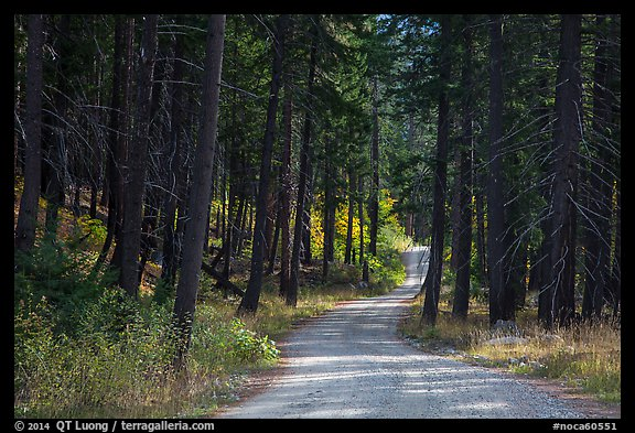 Road in forest, Stehekin Valley, North Cascades National Park Service Complex.  (color)