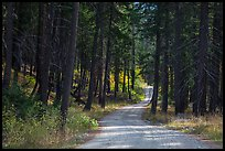 Road in forest, Stehekin Valley, North Cascades National Park Service Complex.  ( color)