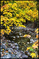 Stream and trees in autum foliage, Stehekin, North Cascades National Park Service Complex. Washington, USA.