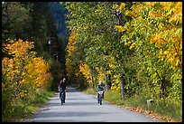 Bicyclists in autumn, Stehekin, North Cascades National Park Service Complex.  ( color)