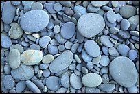 Round pebbles on beach. Olympic National Park, Washington, USA. (color)